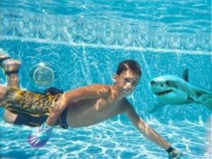 Shark Pool