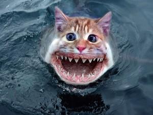 Cat / Shark