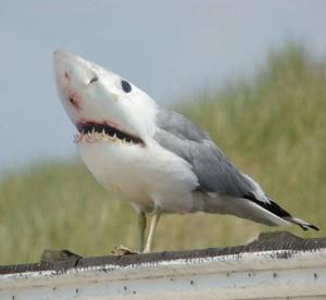 Bird Shark