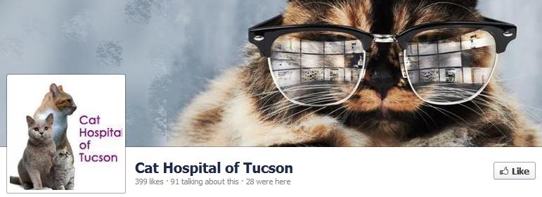 tucson-cat-hospital