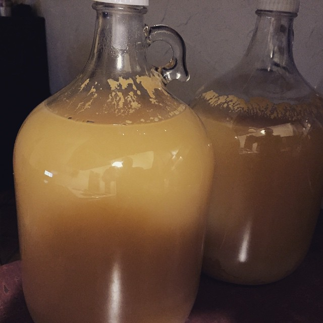Fermenter 2 & 3 of Apple Bottom James hard cider. 7.88% - 8% ABV