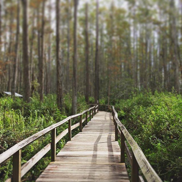 Swamp.